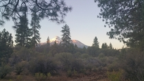 Mt Shasta at dawn