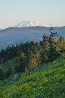Mt St Helens in the morning from Dog Mountain WA US