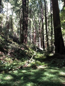Muir Woods Mill Valley CA
