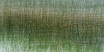 Multiple exposure of reeds in a lake in Uruguay