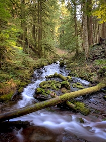 Multnomah Creek Larch Mountain Mt Hood National Forest Oregon