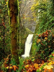 Multnomah Falls along the Colombia River - Oregon