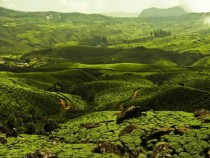 Munnar Keral  xpost from rIncredibleIndia