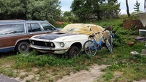 Mustang left to rot