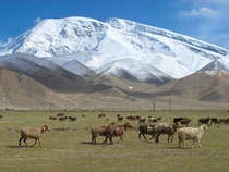 Muztagh Ata meaning ice mountain father is one of the most prominent peaks around Lake Karakul a popular tourist destination at the farthest reaches of western China It stands at  meters and is the rd highest peak in the world