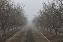 My dad loves two things farming almonds and photography His blog which he updates weekly is full of both Heres some dormant almond trees in the fog for you all