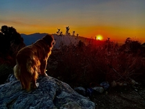 My dog considers tonights sunset
