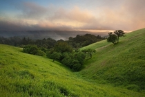 My favorite hillsides in Russian Ridge Open Space California