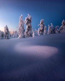My favorite image of  photographed in Finnish Lapland in February this year