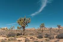 My favorite National Park Ive photographed so far Joshua Tree California