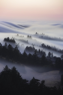 My favorite photo of  it took me  years to capture the rolling fog at Mt Tamalpais CA  nickfjord