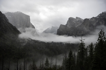 My first post a misty mysterious morning in Yosemite Valley