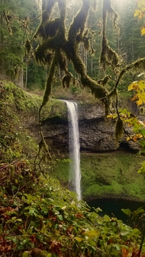 My girlfriend described the landscapes of the northwest best its like you walked onto the pages of Tolkien SILVER FALLS SP OR