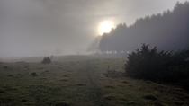 My grainy contribution of an early morning hike in little Skrylle Sweden
