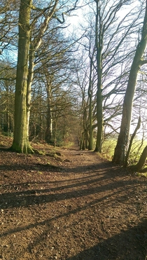 My Morning Forest Walk - Midlands UK   x