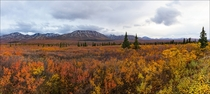 My picture from Denali National Park from a month ago