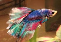 My rainbow fish Mac