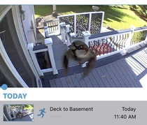 My security camera caught this sparrow