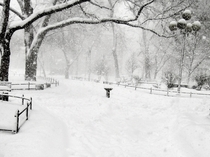 My very old picture - Largest snowstorm in NYC history  Blizzard of  Washington Square Park