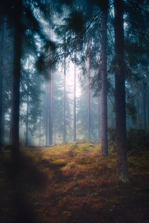 Mysterious glade in a hazy forest Central Finland