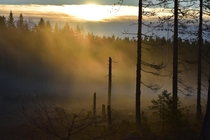 Mysterious sunrise in the woods in Vrmland Sweden