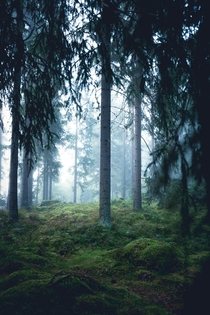 Mysterious vibes in the foggy woods  Central Finland