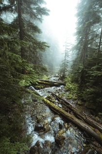 Mysterious woods Whistler British Columbia Canada  Social mikemarkov