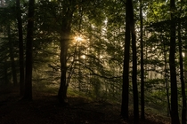 Mystical forest in Koenigstein Saxony Germany by derliebewolf