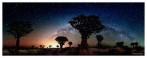 Namibian quiver trees and the glow of the Milky Way