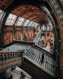 National history museum in London x