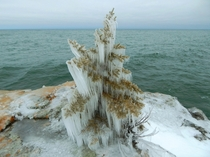 Natural Christmas Tree on the shore of Lake Superior in Minnesota