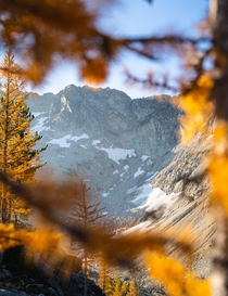 Natural framing in larch season - Washington State