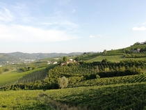 Natural wine in Monferrato northern Italy
