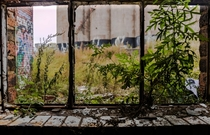 Nature creeping its way through the window Slowly reclaiming what was once hers Chicago IL