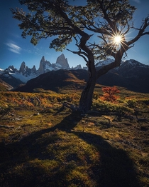 Nature doesnt stop as every year colours are starting to change around El Chalten Missing being down there  marcograssiphotography