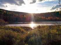 Nature preserve at Binghamton University OC