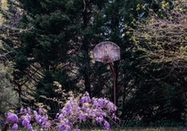 Nature reclaiming an abandoned basketball court - Gastonia NC