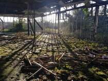 Nature reclaiming an old factory Northern Ireland OC x