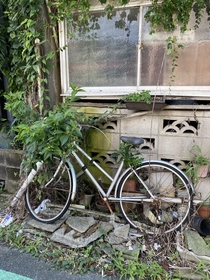 Nature reclaiming the bicycle and the front of this Japanese home