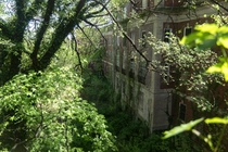 Nature reclaiming this abandoned hospital
