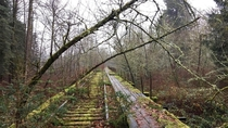 Nature Reclaims an Old Abandoned Railway Snoqualmie Washington USA
