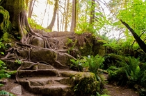 Natures Roots  Canada Coquitlam - Minnekhada Regional Park Just serene and beautiful Look at those roots