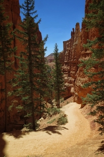Navajo loop trail in Bryce Canyon this past summer