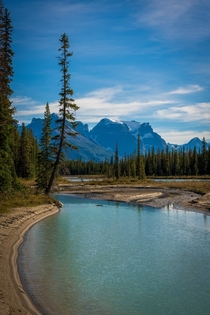 Near an amazing campsite on the Athabasca River Jasper AB