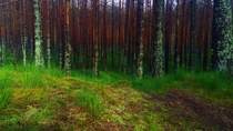 Neringa Forest near the Baltic Sea Lithuania