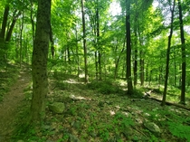 New Jersey Sourlands Mountain Preserve  x