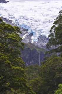 New Zealands Rob Roy Glacier stretching down into lush rain forest