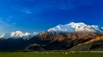 New Zealands South Island that is mountains amp sheep Matukituki River Valley Mt Aspiring National Park