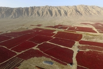 Newly harvested red chili is spread out to dry in the sun in Bayingolin Mongol Autonomous Prefecture Xinjiang Uighur Autonomous Region China