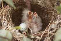 Newly hatched birds